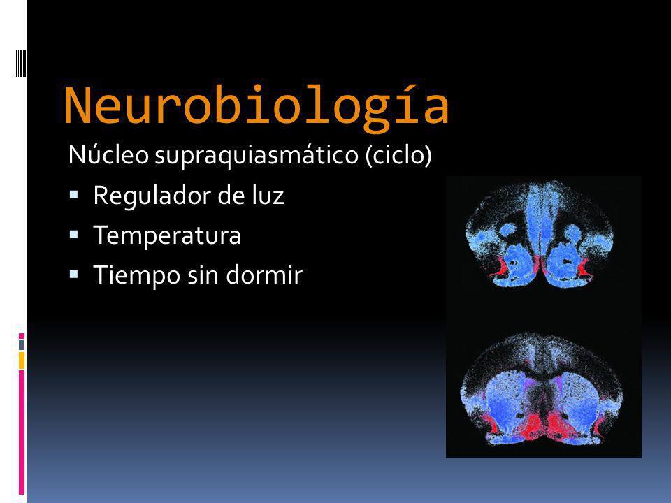 Neurobiología Vigilia DA, NA, AC SRA Locus Ceruleos Hipotálamo posterior No MOR 5HT Telencéfalo basal Tálamo N.Tracto Solitario N.