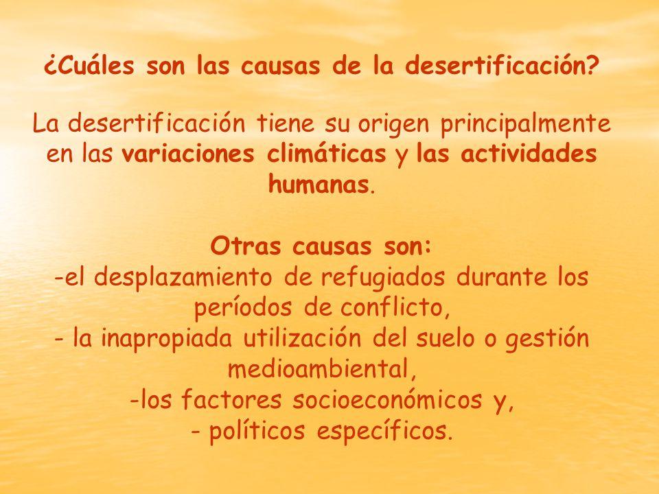 ¿Cuáles son las causas de la desertificación.