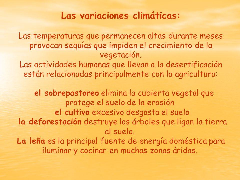 Las variaciones climáticas: Las temperaturas que permanecen altas durante meses provocan sequías que impiden el crecimiento de la vegetación.