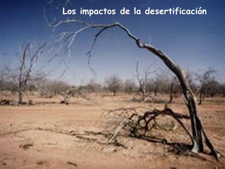 Los impactos de la desertificación