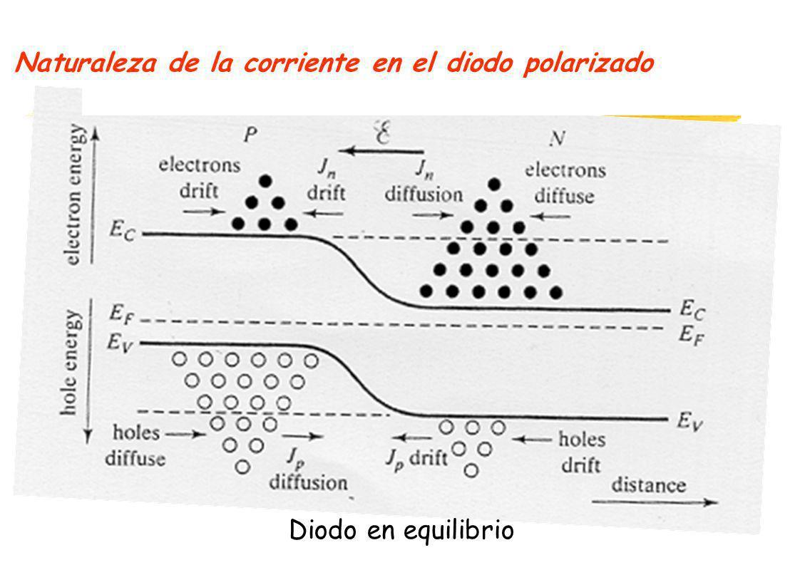 Naturaleza de la corriente en el diodo polarizado Diodo en equilibrio