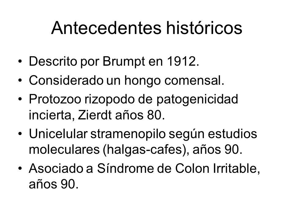 Antecedentes históricos Descrito por Brumpt en 1912. Considerado un hongo comensal. Protozoo rizopodo de patogenicidad incierta, Zierdt años 80. Unice