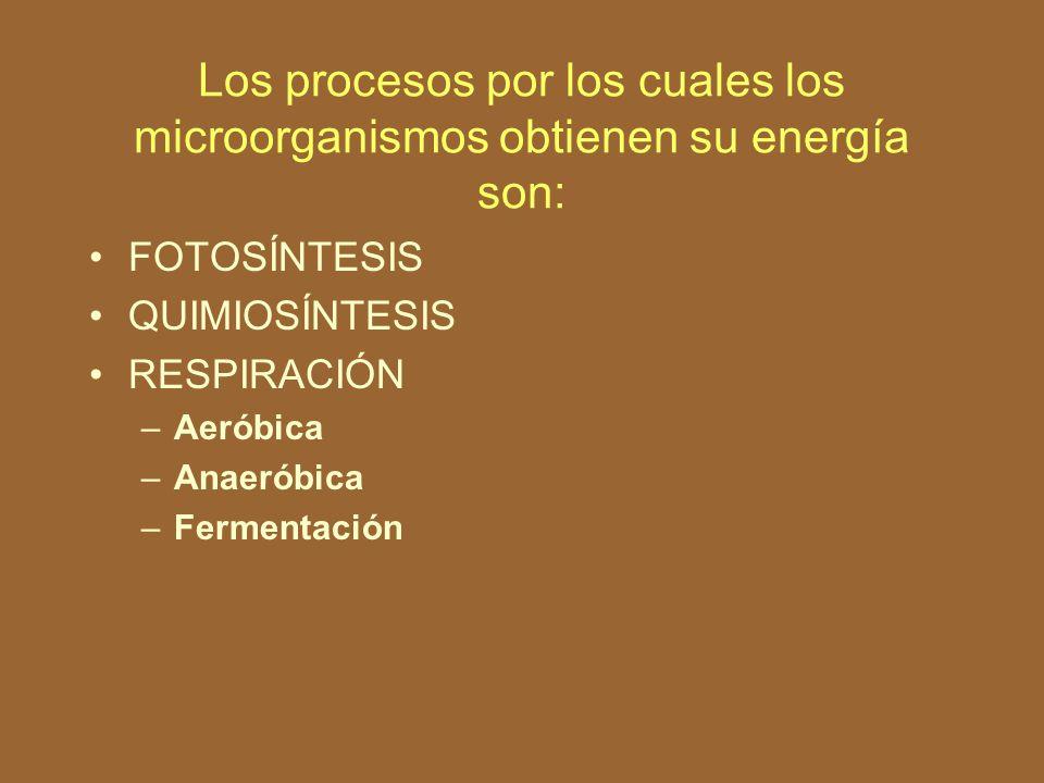 OBTENCIÓN DE LA ENERGÍA CELULAR La célula microbiana obtiene su energía de dos maneras : Degradando compuestos y liberando su energía Almacenando la energía lumínica del sol mediante el proceso de fotosíntesis.