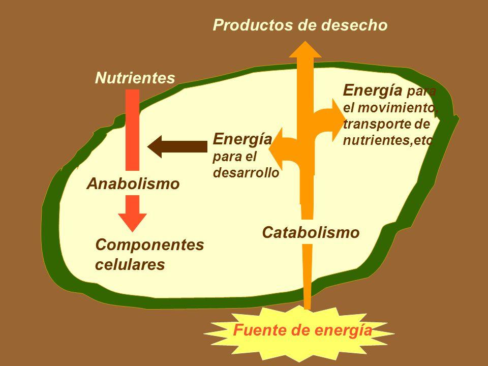 METABOLISMO MICROBIANO María Cecilia Arango Jaramillo Es el estudio de las reacciones químicas que se llevan a cabo en las células
