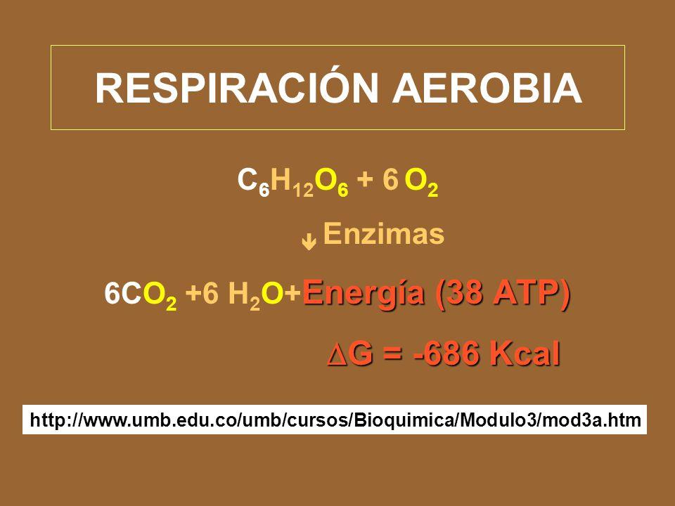 Tipos de respiración Respiración aerobia. Respiración anaerobia (Fermentación).