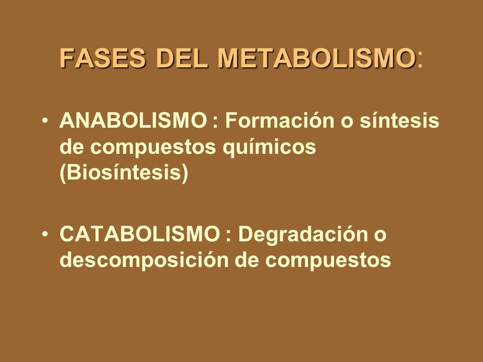 Energía para el movimiento, transporte de nutrientes,etc Catabolismo Productos de desecho Componentes celulares Nutrientes Anabolismo Energía para el desarrollo Fuente de energía