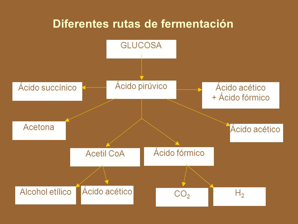 + 2 NADH + 2 H + COOH Ácido pirúvico CH 3 O C2 H Ácido láctico 2 C CH3CH3 + 2NAD + CH 3 COOH Cuando el aceptor de electrones es un ácido orgánico se le llama fermentación, cuando el aceptor es una sustancia inorgánica como NO 2, NO 3, SO 4, CO 3 y fumarato