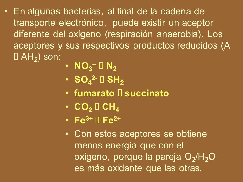 Respiración anaerobia