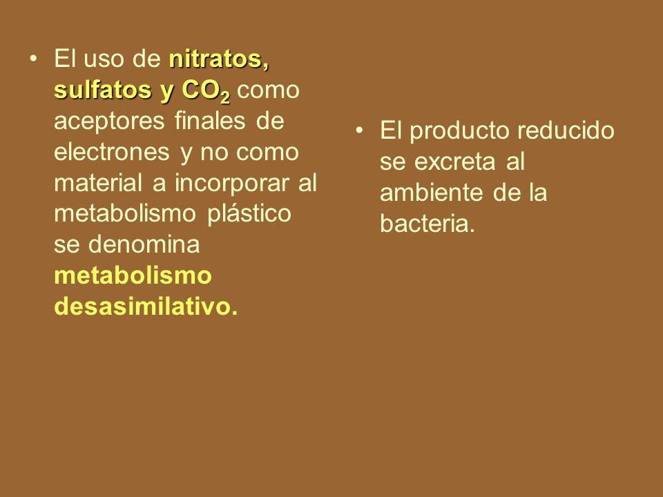 En algunas bacterias, al final de la cadena de transporte electrónico, puede existir un aceptor diferente del oxígeno (respiración anaerobia).