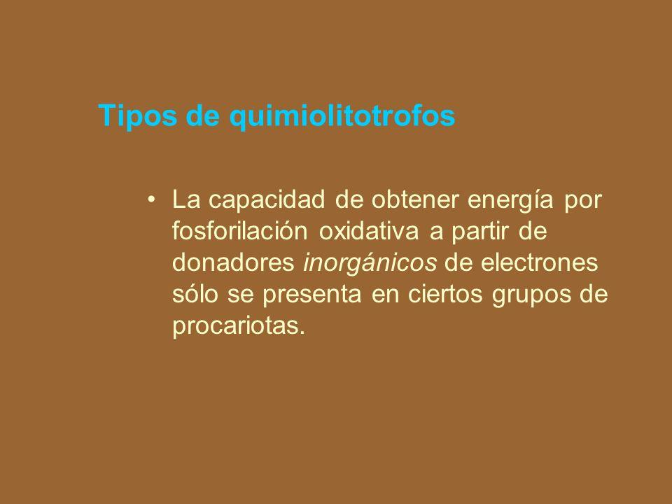 nitratos, sulfatos y CO 2El uso de nitratos, sulfatos y CO 2 como aceptores finales de electrones y no como material a incorporar al metabolismo plástico se denomina metabolismo desasimilativo.