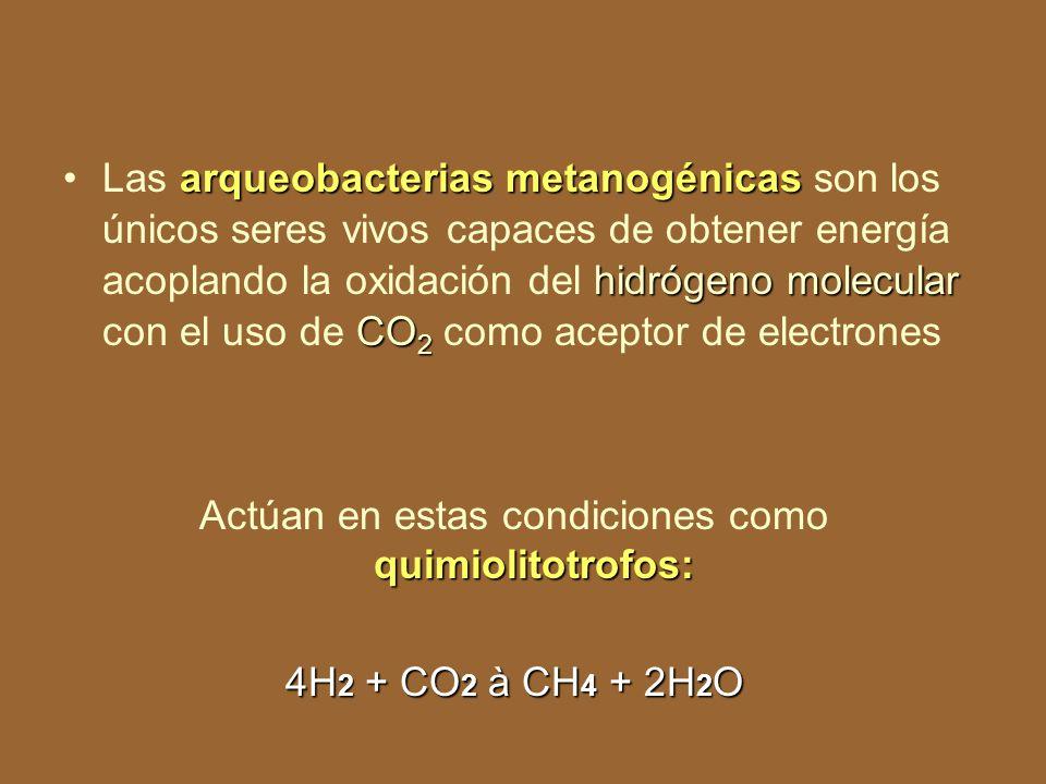 Sólo las bacterias sulfatorredutoras usan el sulfato como aceptor de electrones Por una ruta especial en la que el sulfato primero tiene que activarse con ATP formando la adenosina-fosfo- sulfato ( APS).