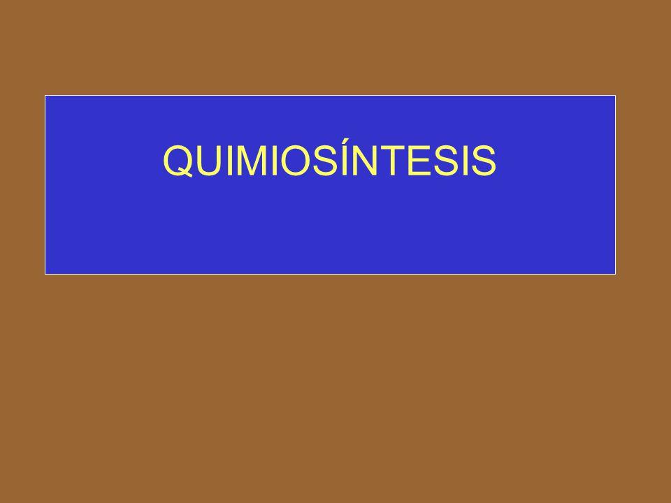 arqueobacterias metanogénicas hidrógeno molecular CO 2Las arqueobacterias metanogénicas son los únicos seres vivos capaces de obtener energía acoplando la oxidación del hidrógeno molecular con el uso de CO 2 como aceptor de electrones quimiolitotrofos: Actúan en estas condiciones como quimiolitotrofos: 4H 2 + CO 2 à CH 4 + 2H 2 O