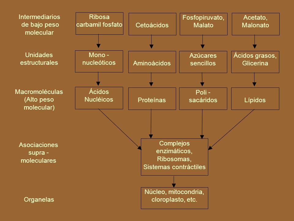 BIOSÍNTESIS (Anabolismo)