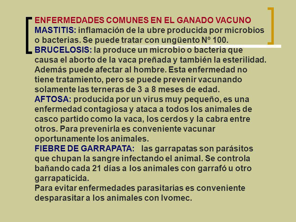 Consulta con personas de la comunidad acerca del cuidado del ganado vacuno y qué lugar ocupa la ganadería en la economía del Departamento de Córdoba.