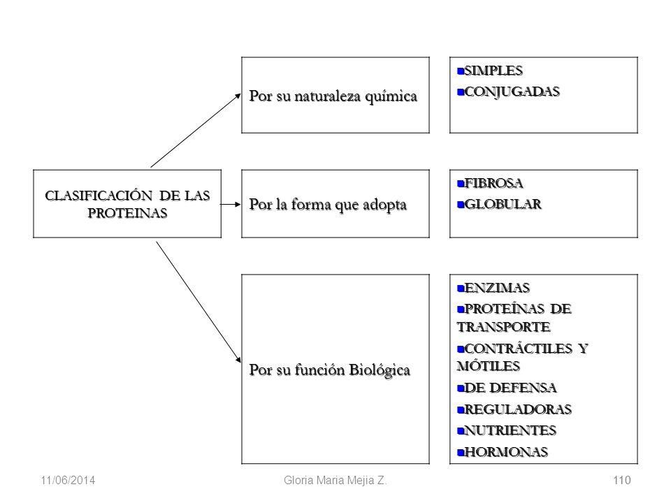 11/06/2014 110 Gloria Maria Mejia Z.110 Por su naturaleza química SIMPLES SIMPLES CONJUGADAS CONJUGADAS CLASIFICACIÓN DE LAS PROTEINAS Por la forma qu