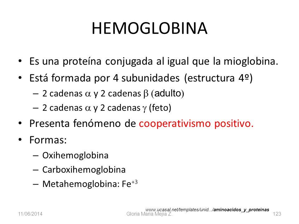11/06/2014 Gloria Maria Mejia Z. 123 HEMOGLOBINA Es una proteína conjugada al igual que la mioglobina. Está formada por 4 subunidades (estructura 4º)
