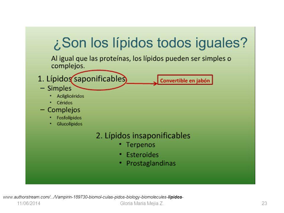 11/06/2014 Gloria Maria Mejia Z. 23 www.authorstream.com/.../Vampirin-189730-biomol-culas-pidos-biology-biomolecules-lipidos-