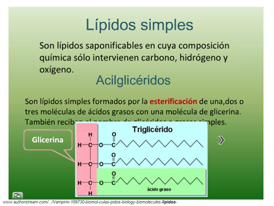11/06/2014 Gloria Maria Mejia Z. 32 www.authorstream.com/.../Vampirin-189730-biomol-culas-pidos-biology-biomolecules-lipidos-