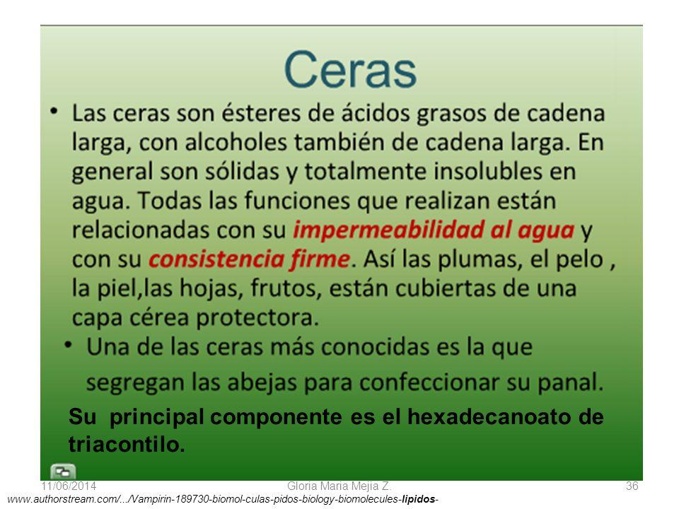 11/06/2014 Gloria Maria Mejia Z. 36 www.authorstream.com/.../Vampirin-189730-biomol-culas-pidos-biology-biomolecules-lipidos- Su principal componente