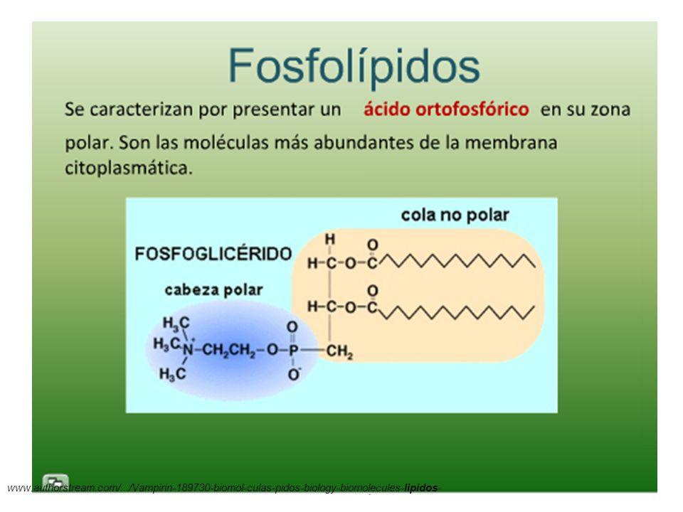 11/06/2014 Gloria Maria Mejia Z. 38 www.authorstream.com/.../Vampirin-189730-biomol-culas-pidos-biology-biomolecules-lipidos-
