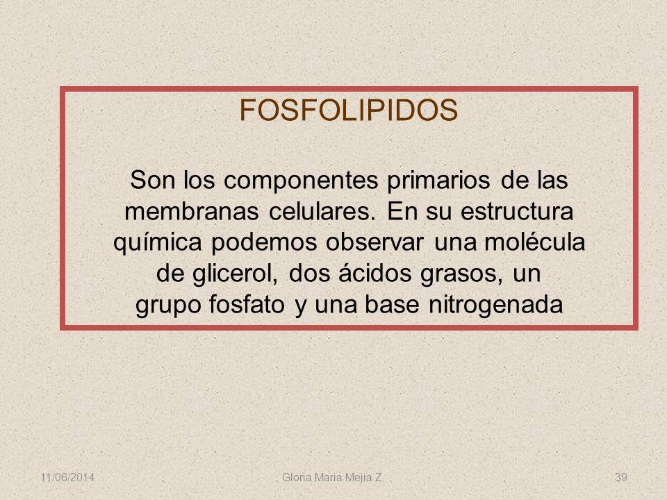 11/06/2014 Gloria Maria Mejia Z. 39 FOSFOLIPIDOS Son los componentes primarios de las membranas celulares. En su estructura química podemos observar u