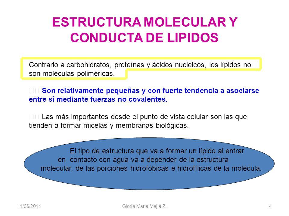 11/06/2014 Gloria Maria Mejia Z. 4 ESTRUCTURA MOLECULAR Y CONDUCTA DE LIPIDOS Contrario a carbohidratos, proteínas y ácidos nucleicos, los lípidos no