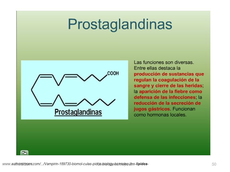 11/06/2014 Gloria Maria Mejia Z. 50 www.authorstream.com/.../Vampirin-189730-biomol-culas-pidos-biology-biomolecules-lipidos-