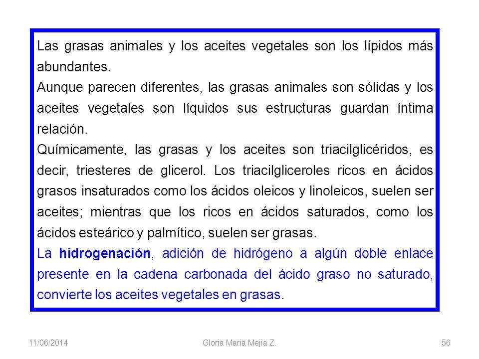 11/06/2014 Gloria Maria Mejia Z. 56 Las grasas animales y los aceites vegetales son los lípidos más abundantes. Aunque parecen diferentes, las grasas