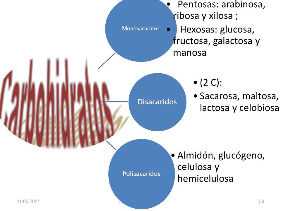 11/06/2014 Gloria Maria Mejia Z. 58 Monosacaridos Pentosas: arabinosa, ribosa y xilosa ; Hexosas: glucosa, fructosa, galactosa y manosa Disacaridos (2