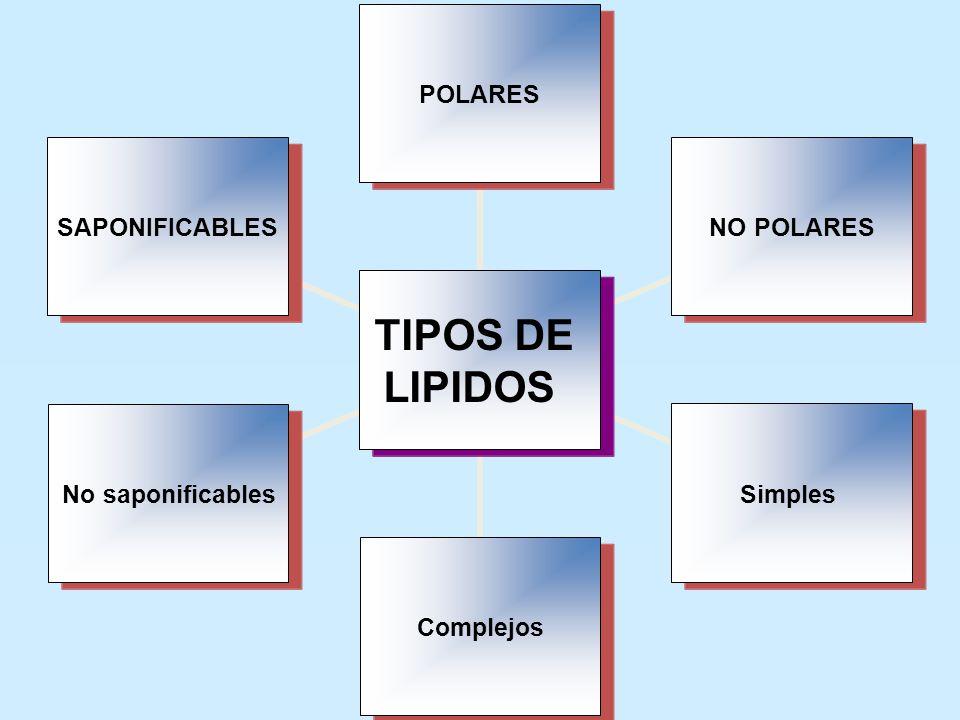 11/06/2014 Gloria Maria Mejia Z. 6 TIPOS DE LIPIDOS POLARESNO POLARESSimplesComplejosNo saponificablesSAPONIFICABLES