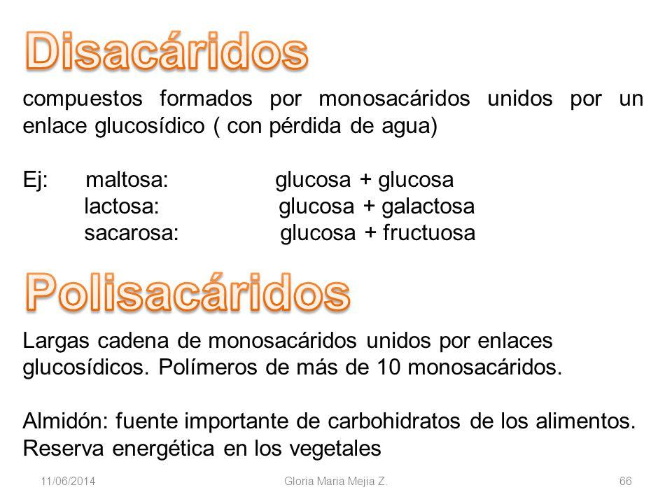 11/06/2014 Gloria Maria Mejia Z. 66 compuestos formados por monosacáridos unidos por un enlace glucosídico ( con pérdida de agua) Ej: maltosa: glucosa