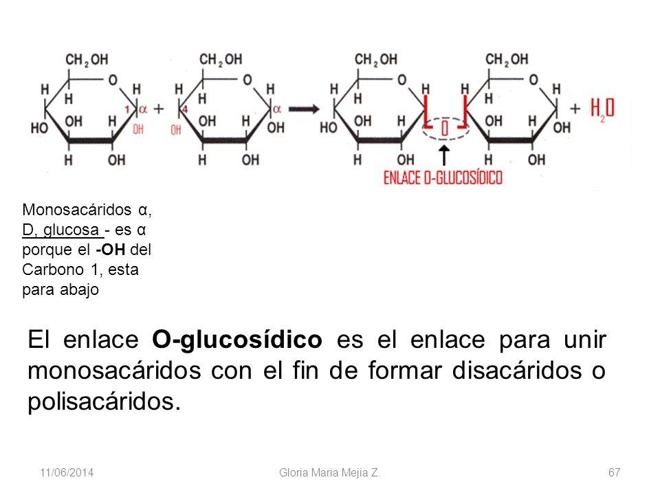 11/06/2014 Gloria Maria Mejia Z. 67 El enlace O-glucosídico es el enlace para unir monosacáridos con el fin de formar disacáridos o polisacáridos. Mon