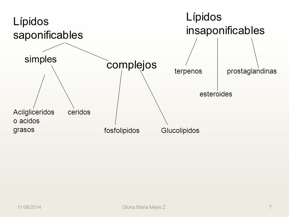 11/06/2014 Gloria Maria Mejia Z. 7 Lípidos saponificables Lípidos insaponificables simples complejos Acilgliceridos o acidos grasos ceridos fosfolipid