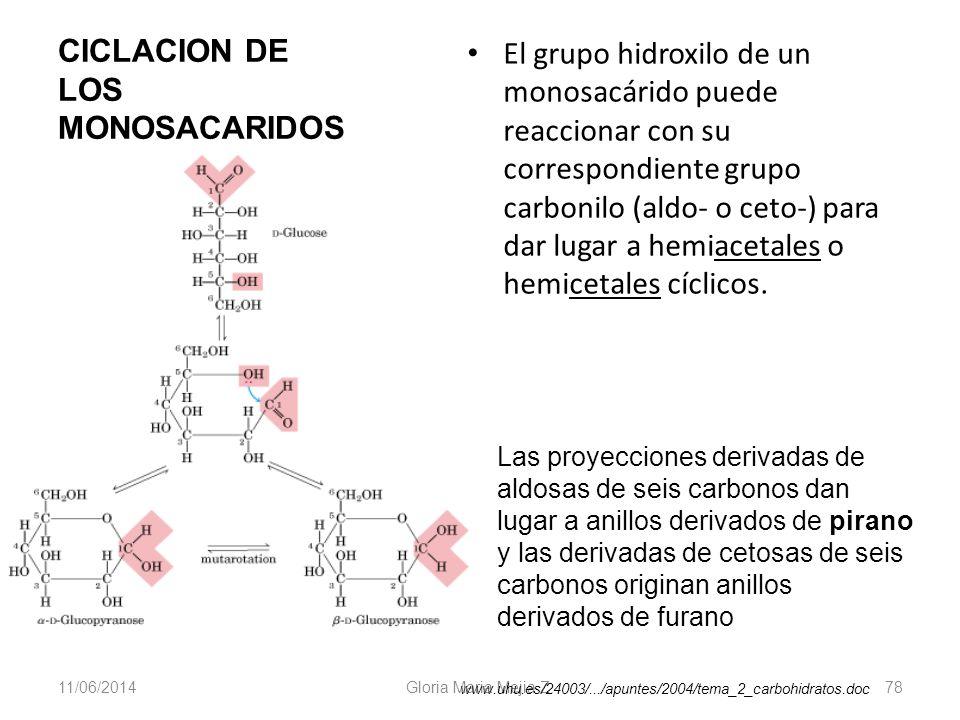 11/06/2014 Gloria Maria Mejia Z. 78 CICLACION DE LOS MONOSACARIDOS El grupo hidroxilo de un monosacárido puede reaccionar con su correspondiente grupo
