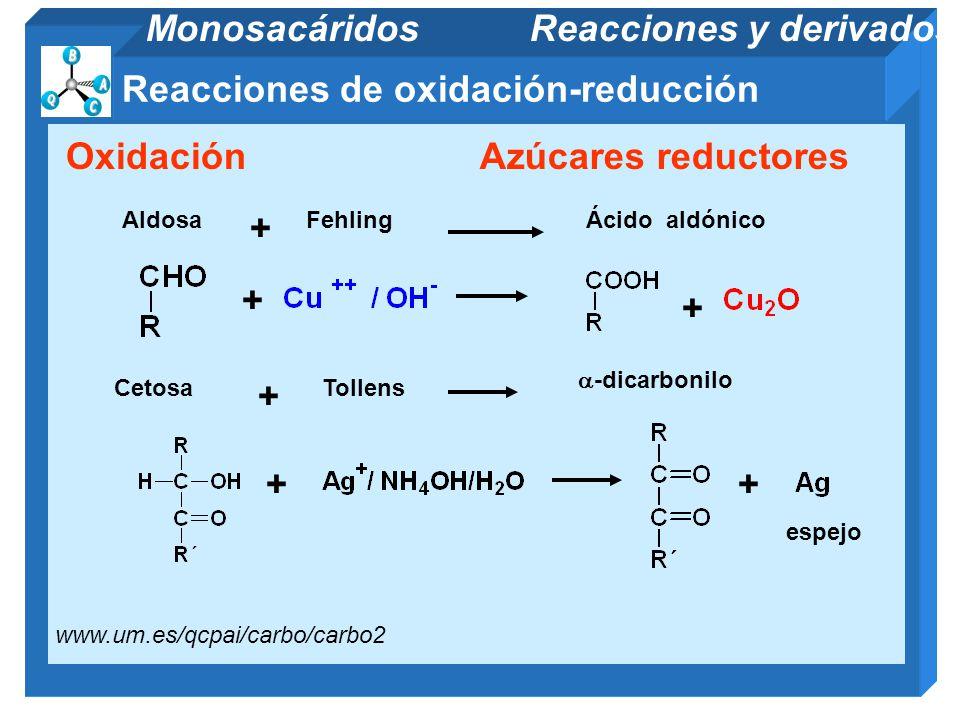 11/06/2014 Gloria Maria Mejia Z. 81 Reacciones de oxidación-reducción Monosacáridos Reacciones y derivados OxidaciónAzúcares reductores + + FehlingAld