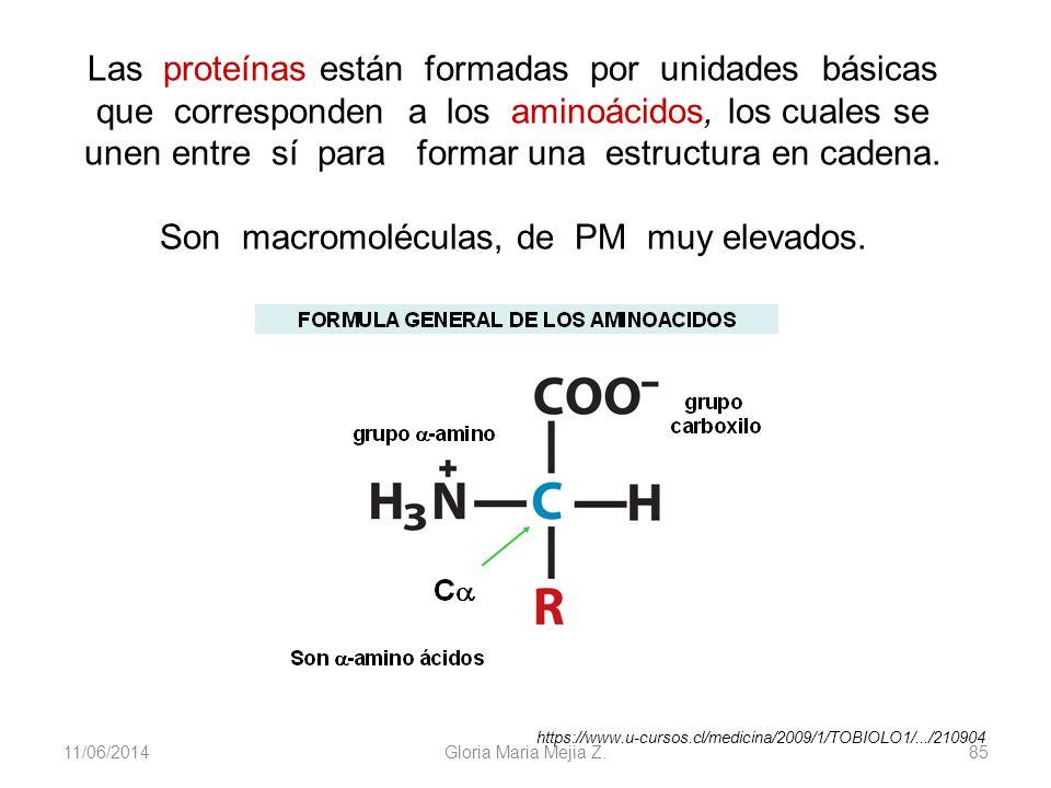 11/06/2014 Gloria Maria Mejia Z. 85 Las proteínas están formadas por unidades básicas que corresponden a los aminoácidos, los cuales se unen entre sí