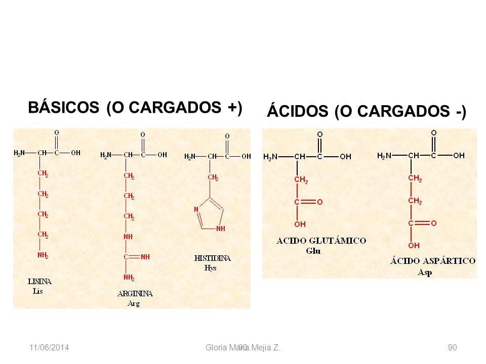 11/06/2014 Gloria Maria Mejia Z. 90 BÁSICOS (O CARGADOS +) ÁCIDOS (O CARGADOS -)