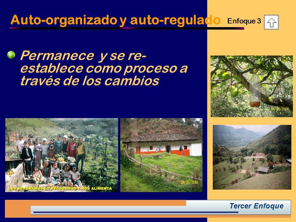 Tercer Enfoque Auto-organizado y auto-regulado Permanece y se re- establece como proceso a través de los cambios Enfoque 3