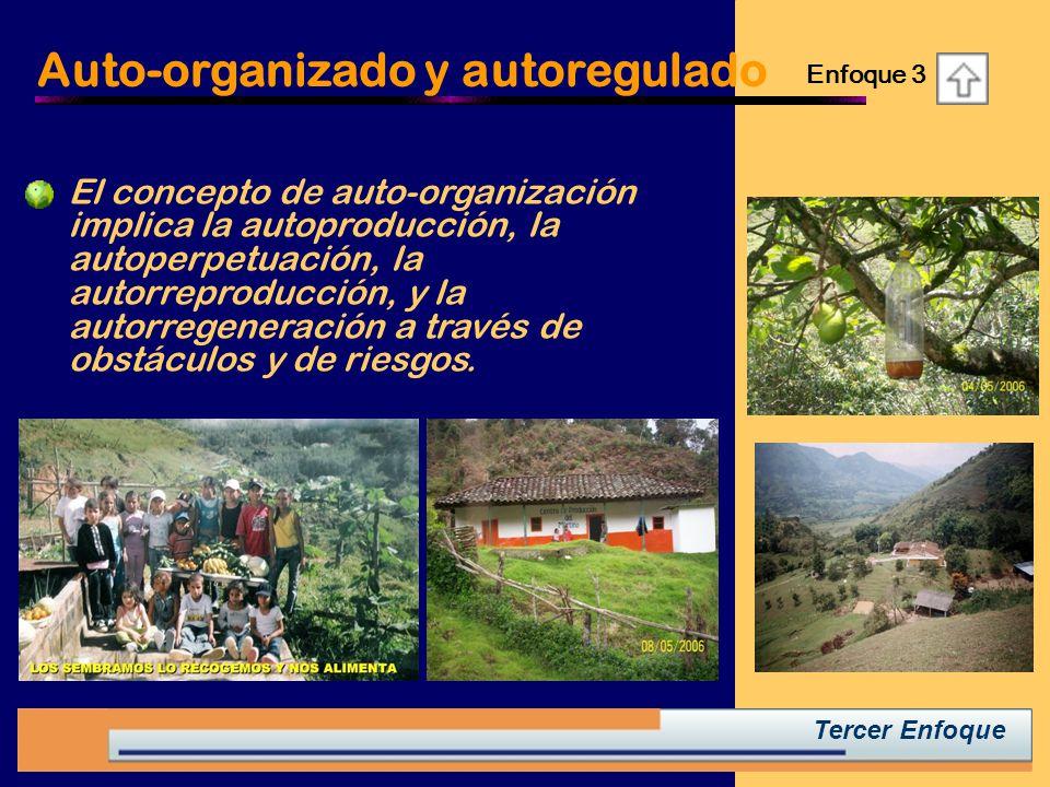 Tercer Enfoque Auto-organizado y autoregulado El concepto de auto-organización implica la autoproducción, la autoperpetuación, la autorreproducción, y la autorregeneración a través de obstáculos y de riesgos.