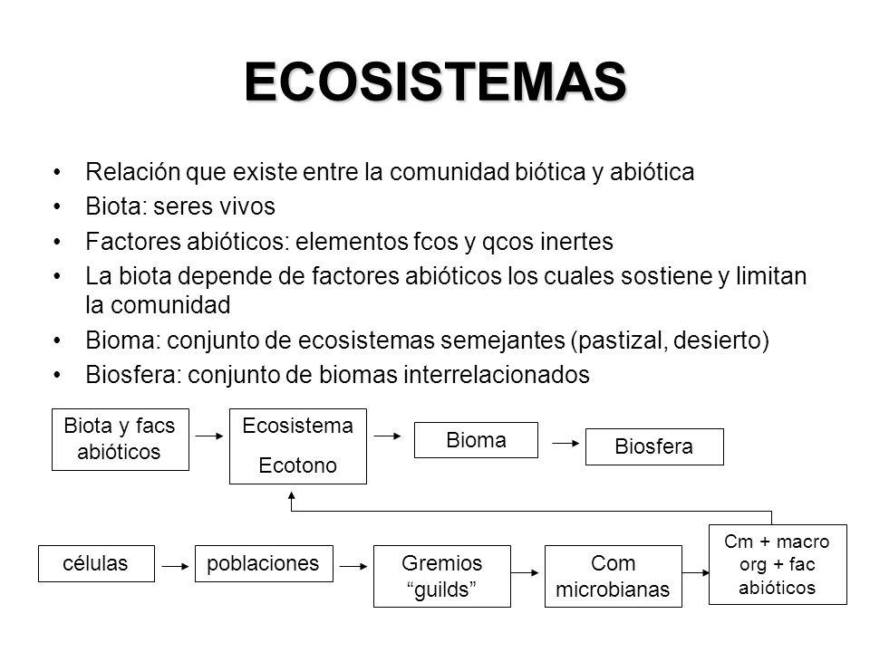 ECOSISTEMAS Relación que existe entre la comunidad biótica y abiótica Biota: seres vivos Factores abióticos: elementos fcos y qcos inertes La biota depende de factores abióticos los cuales sostiene y limitan la comunidad Bioma: conjunto de ecosistemas semejantes (pastizal, desierto) Biosfera: conjunto de biomas interrelacionados Biota y facs abióticos Ecosistema Ecotono Bioma Biosfera célulaspoblacionesGremios guilds Com microbianas Cm + macro org + fac abióticos