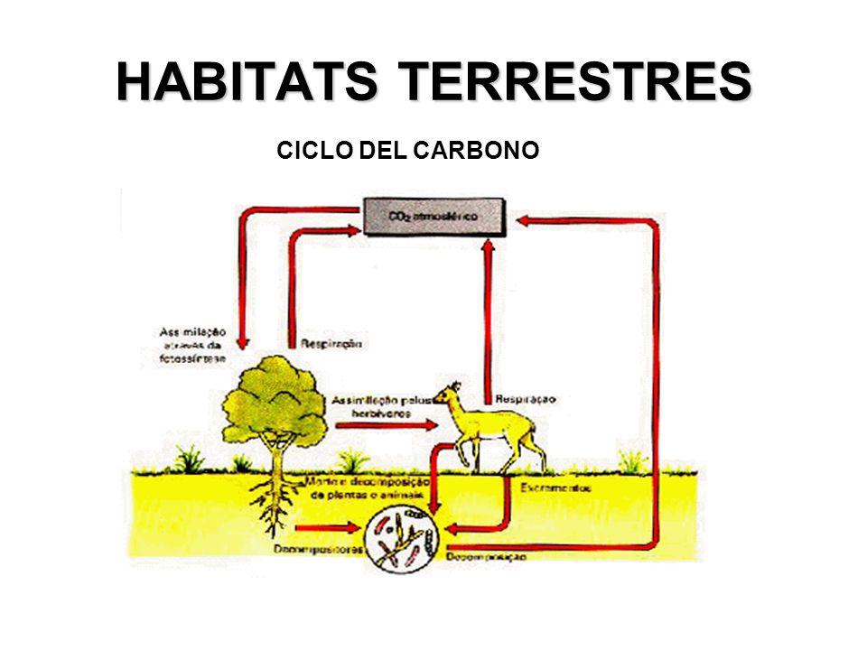 HABITATS TERRESTRES CICLO DEL CARBONO