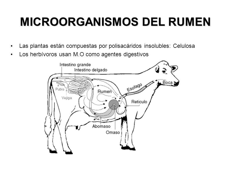 Microbios del Rumen