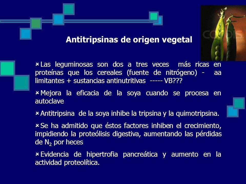 Antitripsinas de origen vegetal Las leguminosas son dos a tres veces más ricas en proteínas que los cereales (fuente de nitrógeno) - aa limitantes + sustancias antinutritivas ----- VB??.