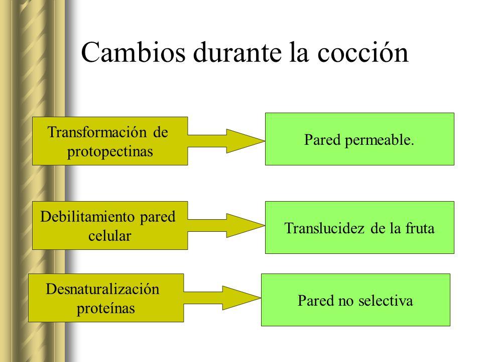 Cambios durante la cocción Transformación de protopectinas Pared permeable. Debilitamiento pared celular Desnaturalización proteínas Translucidez de l