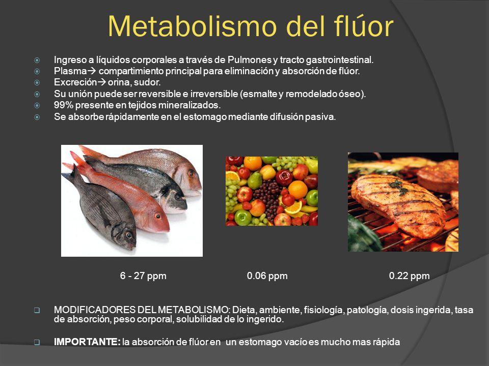 Metabolismo del flúor Ingreso a líquidos corporales a través de Pulmones y tracto gastrointestinal. Plasma compartimiento principal para eliminación y