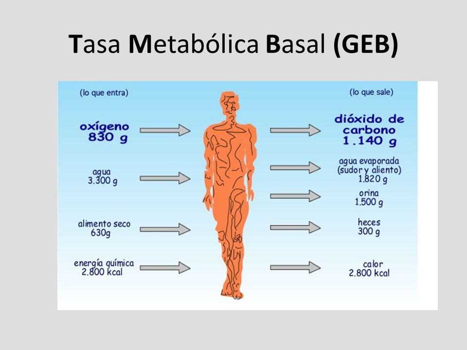 Tasa Metabólica Basal (GEB)
