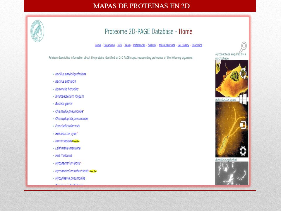 MAPAS DE PROTEINAS EN 2D