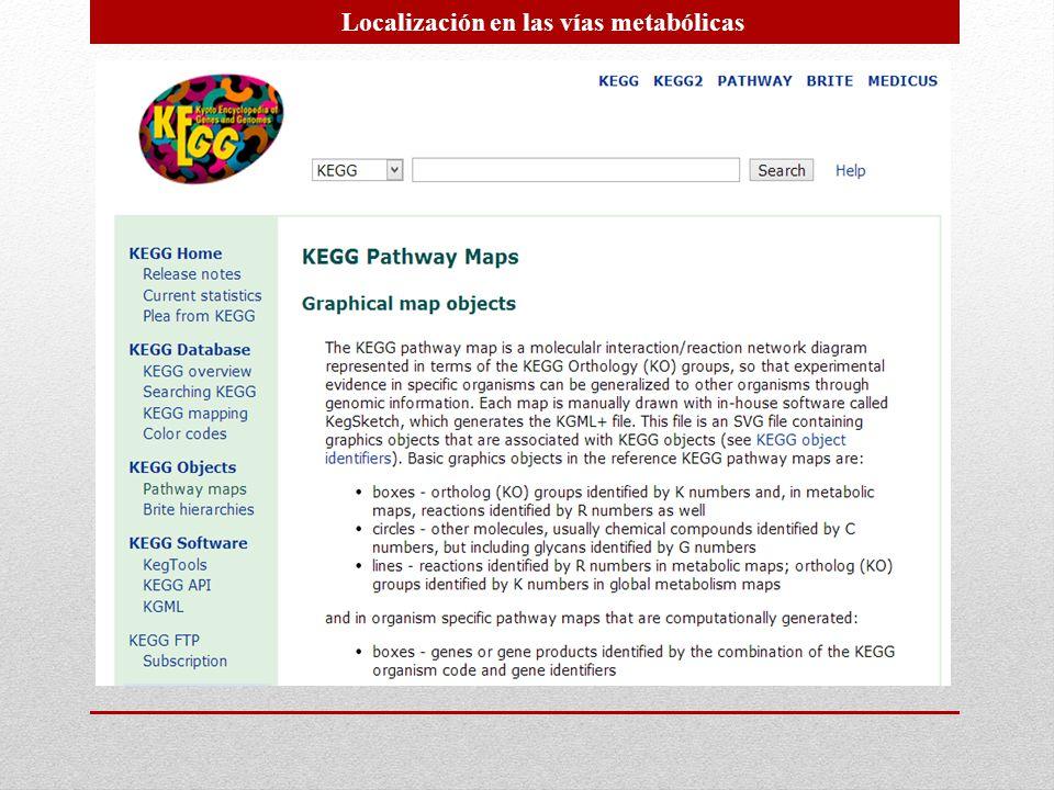 Localización en las vías metabólicas