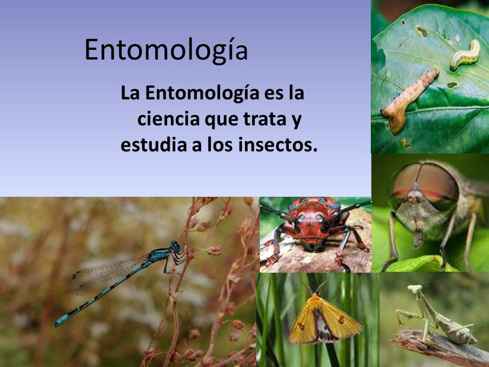 BIBLIOGRAFIA http://www.naturalezadearagon.com/fauna/h imenopteros.php http://www.naturalezadearagon.com/fauna/h imenopteros.php www.duiops.net/seresvivos/coleopteros.html - 26k -