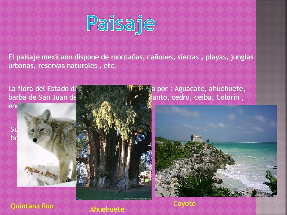 El paisaje mexicano dispone de montañas, cañones, sierras, playas, junglas urbanas, reservas naturales, etc.